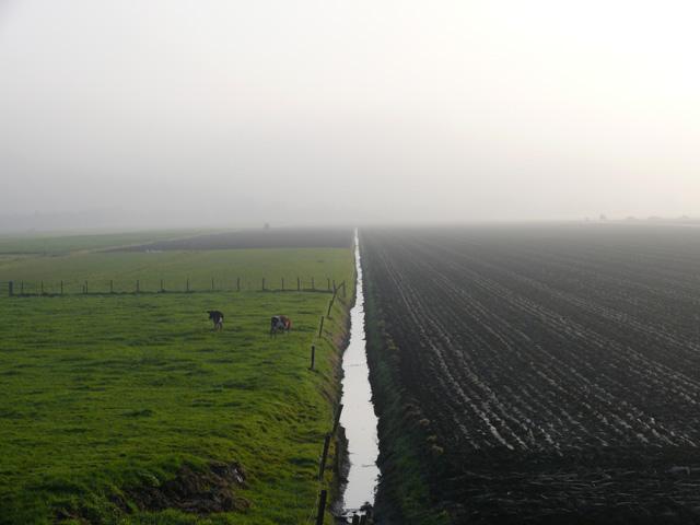 Haarlemmermeer polder. Noord Holland. Pays-Bas. Novembre 2008.