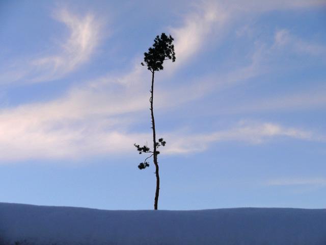 L'arbre. Col de l'Ungersberg. Bas-Rhin. Novembre 2008.