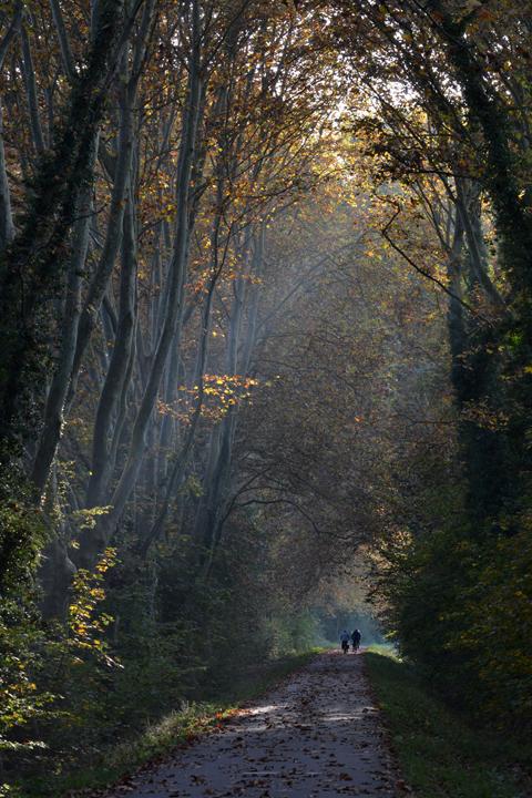 Forêt de la Robertsau. Strasbourg. Bas-Rhin. Octobre 2012.