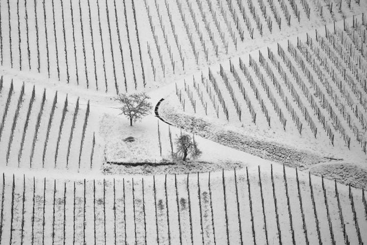Vignoble d'Albé. Bas-Rhin. Janvier 2013.