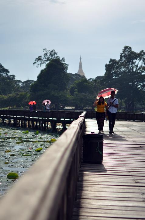 Parc Kandawgyi. Rangoun. Birmanie. Mai 2014.
